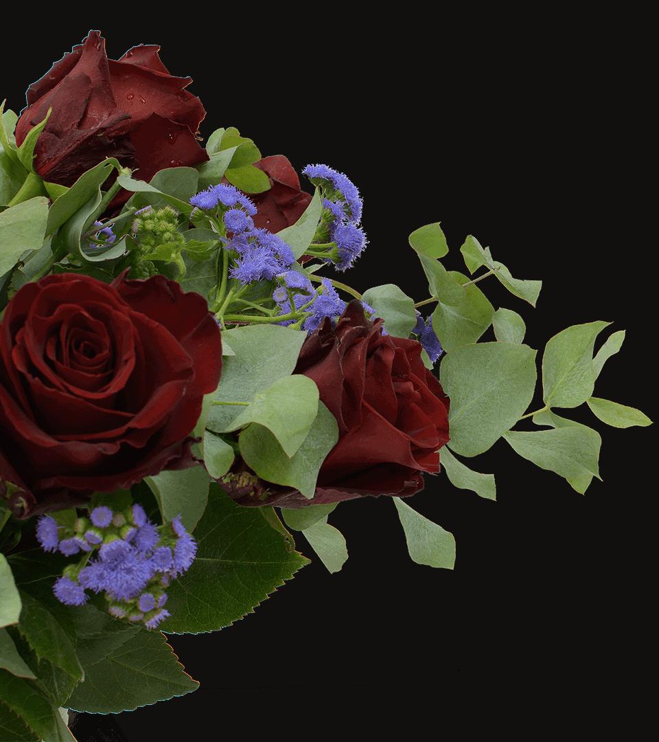 Ecuador Rosen frei